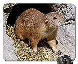 Yanteng Tapis de Souris de Jeu, Tapis de Souris, Chien de Prairie Animal Rongeur Sweet Nature Petit Mignon