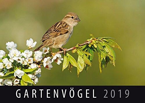 Gartenvögel 2019: Wandkalender