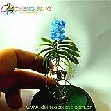 100 Stück Mini Bonsai Orchideensamen Innen Zuhause Miniatur-Blumen-Pflanzen-Topf Samen Garten Diy Pflanze Sementes 2016 Seltene Blumen-Geschenk-Mehrfarbiges