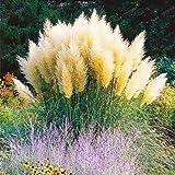 Pinkdose Förderung Mischfarben Pampasgras Pflanze Bonsai Balkon bunt Gras flores beste natürliche Dekoration für Garten 200pcs / bag: 3