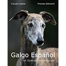 Galgo Español: The Spanish Sighthound