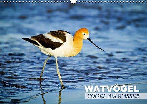 Vögel am Wasser - Watvögel (Wandkalender 2015 DIN A3 quer): Regenpfeifer, Wassertriel & Co. (Monatskalender, 14 Seiten) (CALVENDO Tiere) -