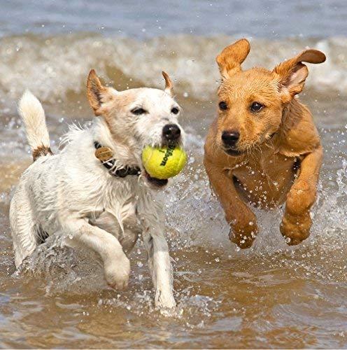 """tierschutzorganisation RSPCA Geburtstagskarte blank Hunde Spielen am Strand """"15,9x 15,9cm R2135540"""