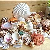 Gemini _ Mall Strandmuscheln, verschiedene Arten, natürliche Muscheln