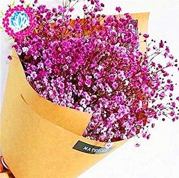 Fash Lady Kacasesi 100 Stück Beutel Mischung Regenbogen Gänseblümchen Pflanzen
