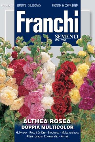 Franchi Rose trémière