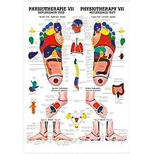 Reflexzonen Fuss Mini-Poster Anatomie 34x24 cm medizinische Lehrmittel