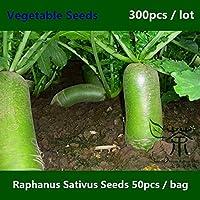 Shopmeeko ^^ Único & amp; Colorido Raphanus Sativus ^^^^ 300 piezas, vegetales de raíz comestible Luobo chino ^^^^, rábano verde raro de carne sabrosa ^^^^