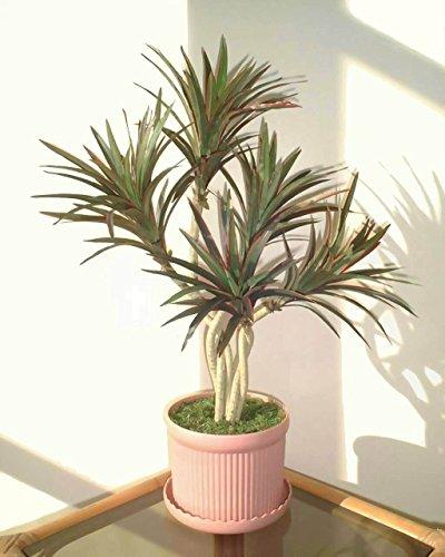 Yucca Palma (60cm) - Albero Artificiale (SENZA VASO)