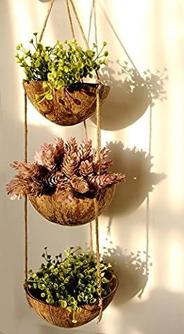 exotique Élégance 3étages Coquille de noix de coco à suspendre Pot de fleurs Pot de fleurs.