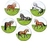 Kühlschrankmagnete Pferde Magnete für Magnettafel Kinder stark 6er Set mit Motiv Tiere groß rund 50mm