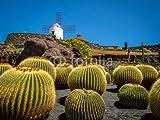 druck-shop24 Cactus Garden in Lanzarote #118140118 - Imagen sobre lienzo, póster de fotos, cartel de aluminio, cristal acrílico, placa Forex, lámina adhesiva, Leinwand - 3:2 - 60 x 40 cm / 40 x 60 cm