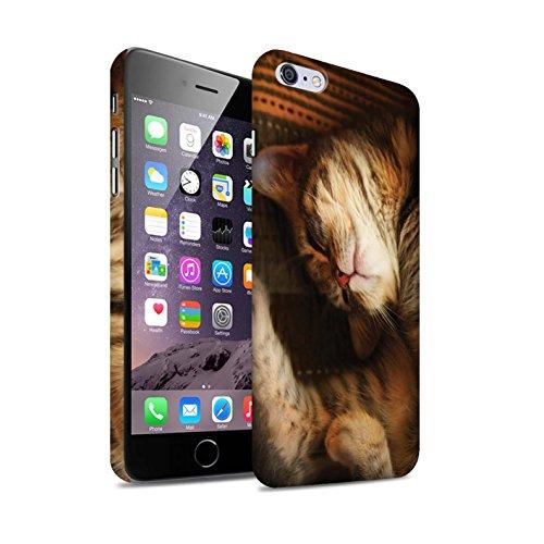 Officiel Elena Dudina Coque / Clipser Matte Etui pour Apple iPhone 6S+/Plus / Le Calin/Chiot/Chien Design / Les Animaux Collection Endormi/Tigré Chat