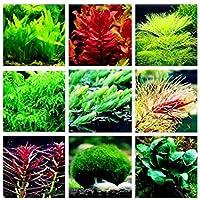 Suchergebnis Auf Amazon De Fur Aquarium Samen Blumen Pflanzen