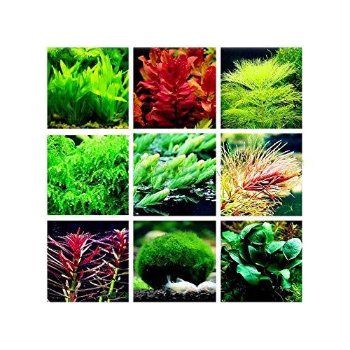 Blue Vesse Aquarium Wasser Gras Samen FischBehälter Dekor Mix Samen Indoor Landschafts Ornament