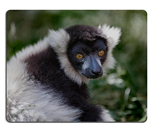MSD Natural Rubber Gaming Mousepad IMAGE ID: 39083081 Black and white ruffed lemur (Ruffed Lemur)