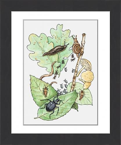 framed-print-of-illustration-of-insects-leaves-and-fungus