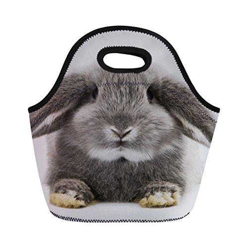 Thermo-Hasen für Kinder Erwachsene Mittagessen Tasche Kühltasche mit Chaqlin M Pet-23 (Schultergurt Jungen-mittagessen-tasche)