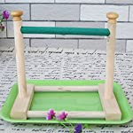 Hypeety Small Bird Parrot Stand Perch Table Top Stand Playground Grind Perch Swing Training Playstand Exercise Chew Toys… 4