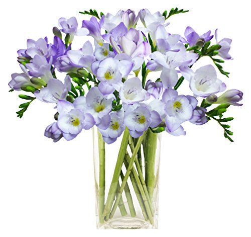eden4flowers-postal-53-classic-freesias-birthday-flowers-thank-you-and-anniversary-bouquet-lilac