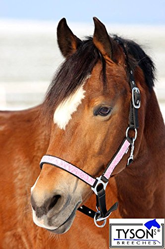 glitzerhalfter-rosa-fany-nylon-glitzer-halfter-minishetty-shetty-pony-vb-wb-tysons-breeches-warmblut