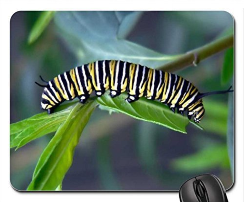 caterpillar-of-monarch-butterfly-mouse-pad-mousepad-butterflies-mouse-pad