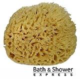 "Sea Wool Sponge 6-7"" (X-Large) by Bath & Shower Express ® Natural Renewable Resource!"