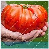 Go Garden Zlking 200 Stück Große Rote Tomate Topfgemüse San Marzano Tomate Erbstück Geöffnete bestäubte Tomate