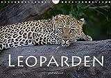 Leoparden - groß und klein (Wandkalender 2018 DIN A4 quer): Faszinierende Aufnahmen dieser wunderschönen Raubkatze (Monatskalender, 14 Seiten ) ... [Kalender] [Jun 29, 2017] Styppa, Robert