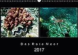 Das Rote Meer ? 2017 (Wandkalender 2017 DIN A3 quer): Bunte Artenvielfalt und Unterwasserlandschaften an den Riffen im Roten Meer. (Monatskalender, 14 Seiten ) (CALVENDO Tiere) -