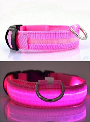 Mejor Perro visibilidad seguridad   USB Batería LED