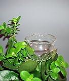 4 Stück Durstkugeln Bewässerungskugeln Durstkugel Pflanzensitter GBGR