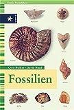 Image de Fossilien