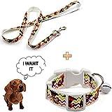 Treat Me Hunde Halsband mit Leine Cool Farbespiel Neuartig Verstellbar Exklusive Hundeleine mit Halsband Zubehör Hundehalsbänder Farbe auswählbar