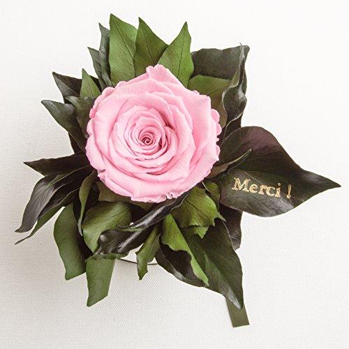 """Ewige Rose konserviert Rosenstrauß mit Goldschrift """"Merci"""" 3 Jahre haltbar Danksagung Gastgeschenk ROSEMARIE SCHULZ® (Rosa)"""