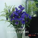 Grande vendita originale Confezione 100 semi / Pack, balcone semi patio piante in vaso di fiori verdi non dimenticare erba, ti scordar di me-seme