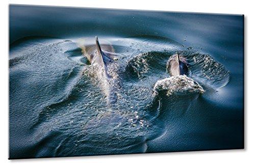 Bild auf Leinwand Delfine Größe: 60cm x 90cm | Delfin Delfine Meer Wasser Blau Delfinbaby Wal Weich Abtauchen | Aus der Serie: Tiere der Meere | Farbe: blau | Rubrik: tiere + natur