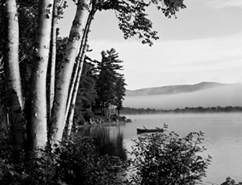 USA Maine Weld Webb Lake birches and cottage with morning mist Poster Drucken (45,72 x 60,96 cm) - Maine Cottage