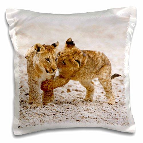 Danita Delimont - Lions - Africa, Two