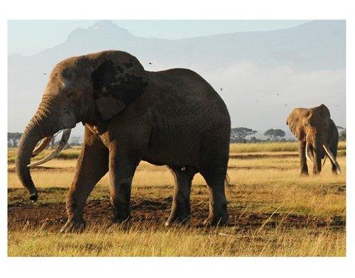 WTD No. 81–Póster de elefantes Kilimanjaro '400x 280cm, dimensiones: 280x 400