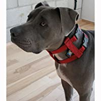 Cesar Millan Collier de dressage original américain pour chien avec laisse