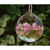 Haodou florero de cristal Jarrón hidropónico Forma de bola clara decoración de cristal de la planta