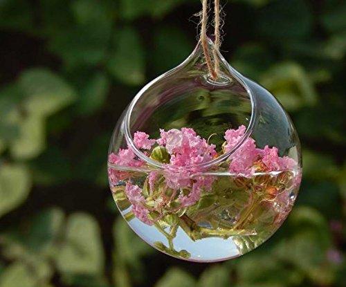 Haodou florero de cristal Jarrón hidropónico Forma de bola clara dec