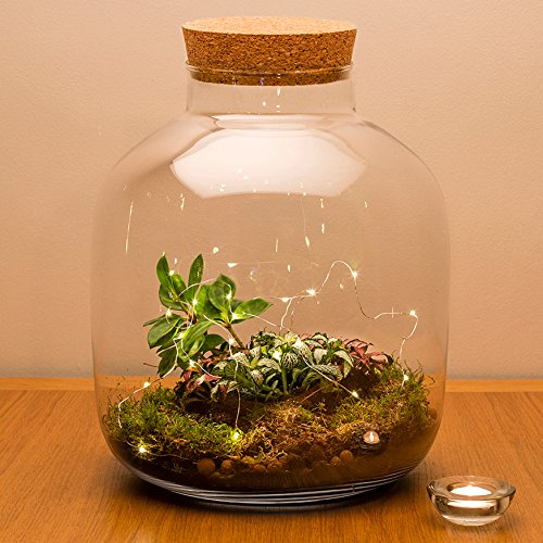 'Urban Botanist Terrarium aus Kork mit Ökosystem, mit Live-Pflanzen, Fully assembled with live plants and LED lights