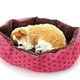 Glodenbridge Cuccia per Animali Domestici, Soft Round Cattery Cuccia per nidi, Ideale per Cani, Gatti, ECC. (1 Confezione)