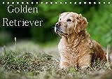 Golden Retriever (Tischkalender 2019 DIN A5 quer): 13 schöne Golden Retriever-Portraits für das ganze Jahr (Monatskalender, 14 Seiten ) (CALVENDO Tiere)