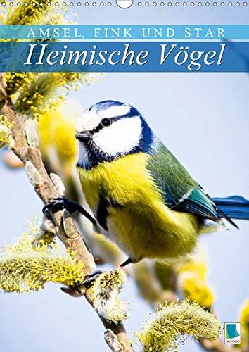 Amseln Tiere (Amsel, Fink und Star: Heimische Vögel (Wandkalender 2020 DIN A3 hoch): So vielfältig ist die heimische Vogelwelt (Monatskalender, 14 Seiten ) (CALVENDO Tiere))
