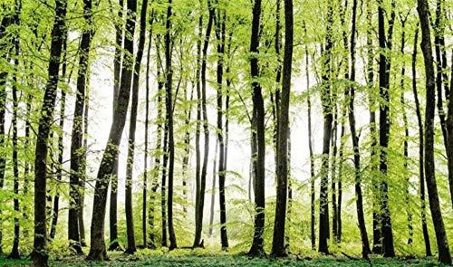 Wald Greenwood Sunshine Benutzerdefinierte Größe 3D Wallpaper Wandaufkleber Wohnzimmer Sofa TV Hintergrund Tapete Wohnkultur, 250x175cm Greenwood Wallpaper