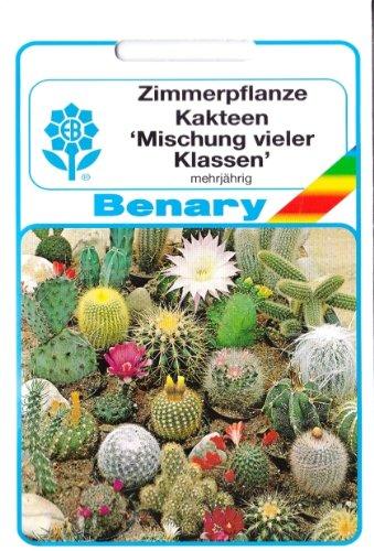 Kaktus, Kakteen, Mischung vieler Klassen, Saatgut, Sämereien, ca. 40 Samen