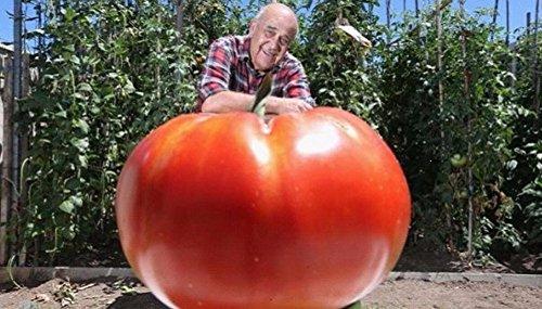 100 / bag riesige große Tomatensamen Extra-large, extra-fleischig, Extra schmackhafte Tomaten Gemüsesamen für Heimpflanz